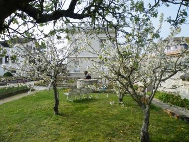 jardin et cerisiers a ouistreham